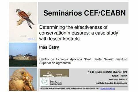Lesser Kestrels Conservation